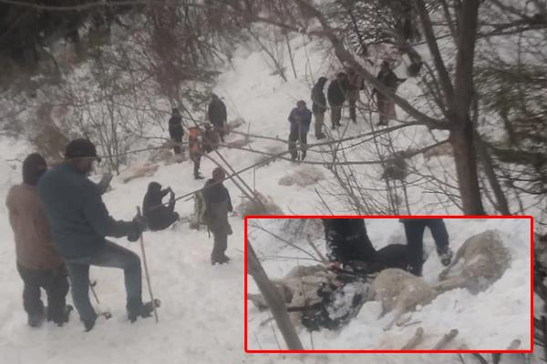 कुल्लू: मणिकर्ण के शिलानाला में 280 भेड़ बकरियों की ग्लेशियर में दबने से मौत