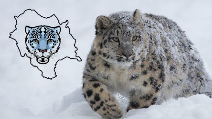 हिमाचल बर्फानी तेंदुए व इसके शिकार बनने वाले जानवरों का मूल्यांकन करने वाला पहला राज्य बन गया है।