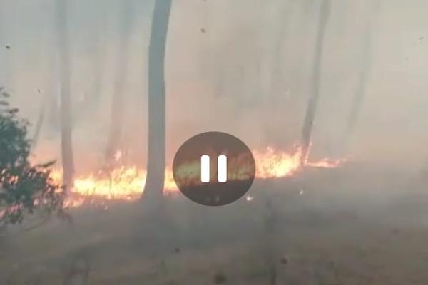 बिलासपुर के निहारी जंगल में 24 घंटों से लगी आग, करोड़ों का नुकसान