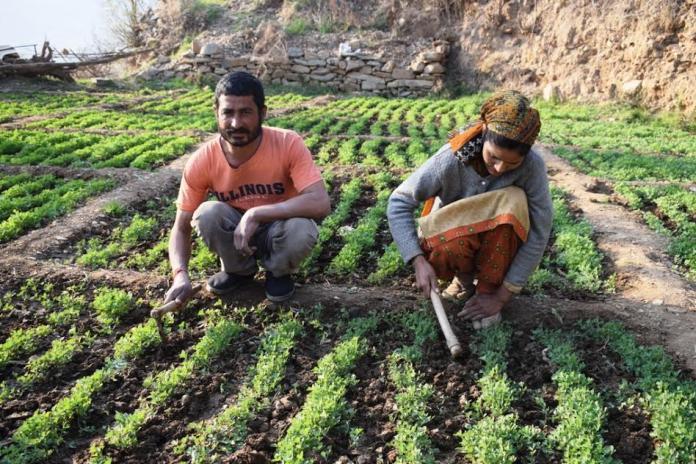जयराम के परिवार के लिए आशा की किरण लाई सौर सिंचाई योजना